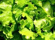 Рецепты из зелени